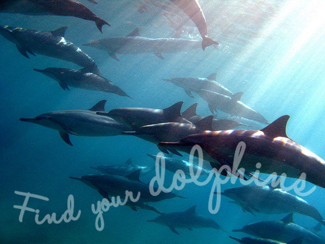 find_dolphins